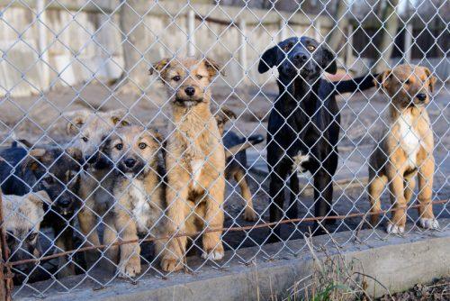 anjing anjing di dalam shelter