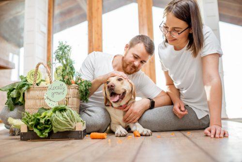 anjing bersama pawrent dan sekeranjang sayur-sayuran