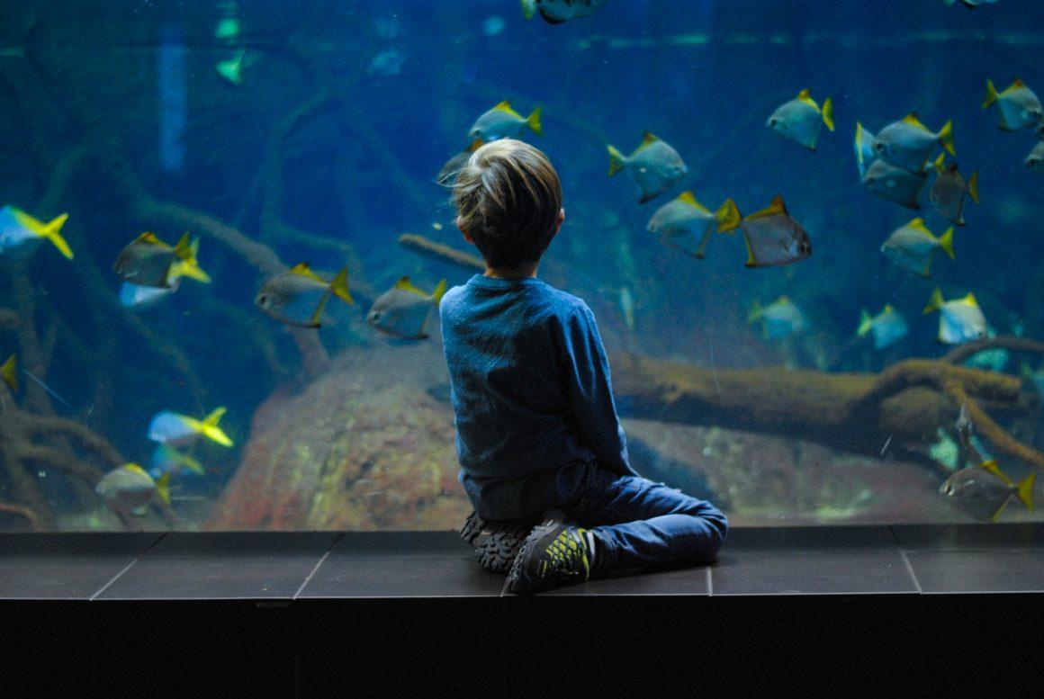 seorang anak sedang menatap akuarium besar yang berisi banyak ikan