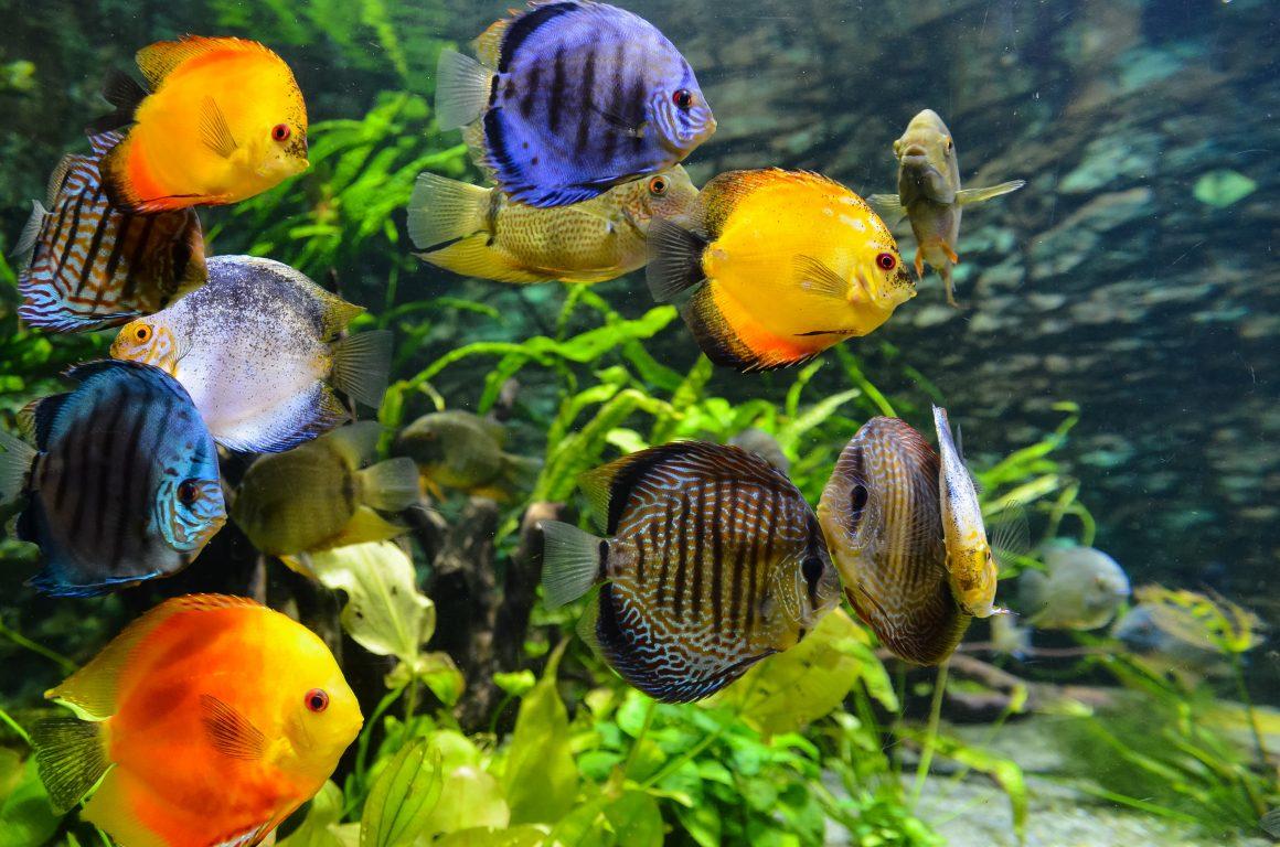 beragam jenis ikan warna-warni berenang