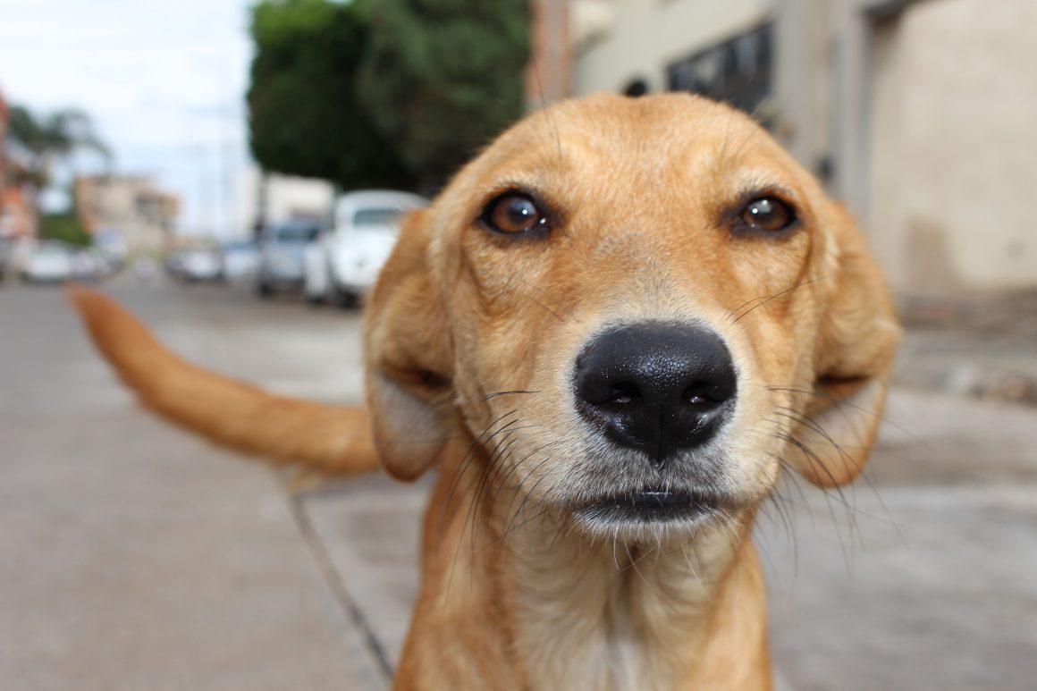 seekor anak anjing dengan tatapan nanar
