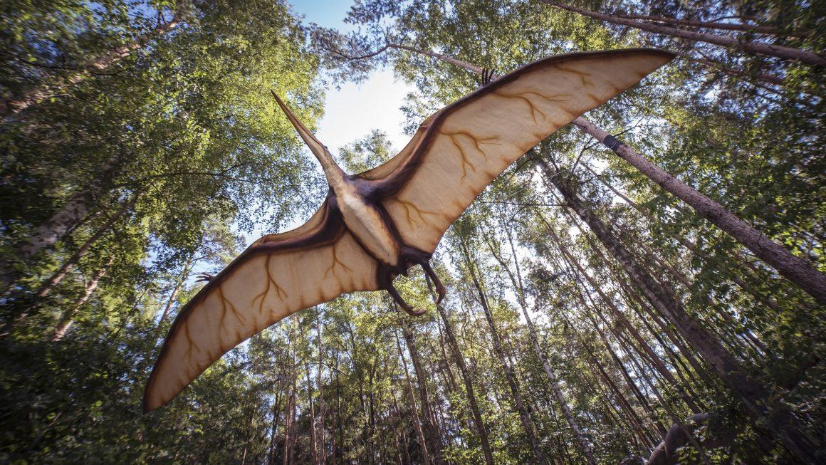 pterosaurus adalah salah satu reptil terbang zaman dinosaurus yang telah punah