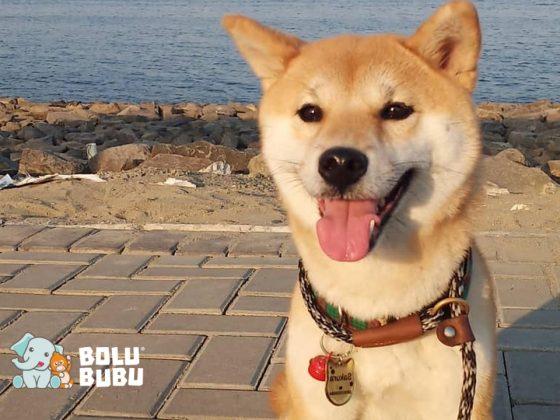 Uno dog