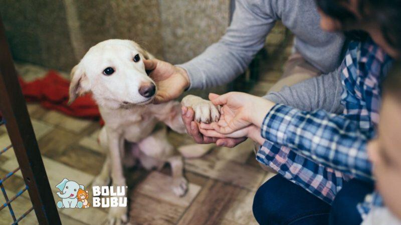 adopsi hewan
