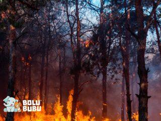 kebakaran di australia