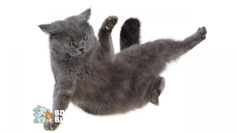 10 Tiktok Kucing Ini Imut Banget Deh Nomer Berapa Favoritmu Bolu Bubu