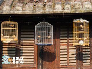mengurung burung di dalam sangkar