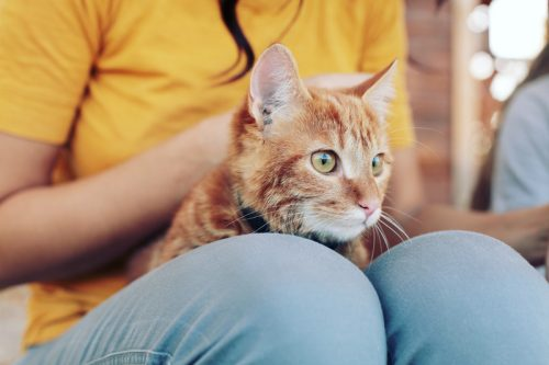Kucing oranye dan pemiliknya