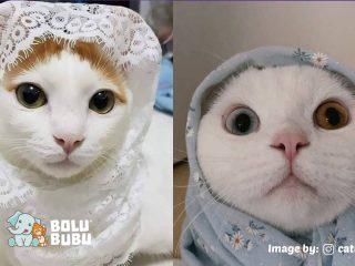 kucing berhijab edisi ramadan
