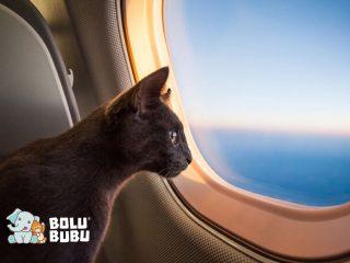 kucing di dalam pesawat
