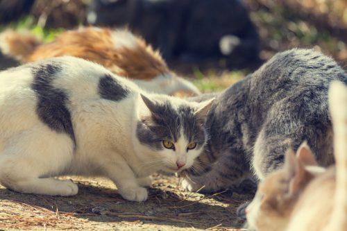 kucing kampung di jalan