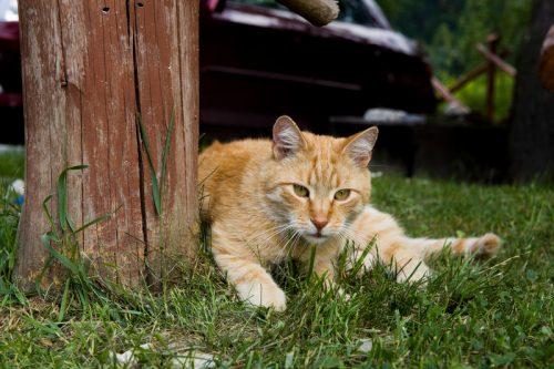 kucing oranye di atas rerumputan