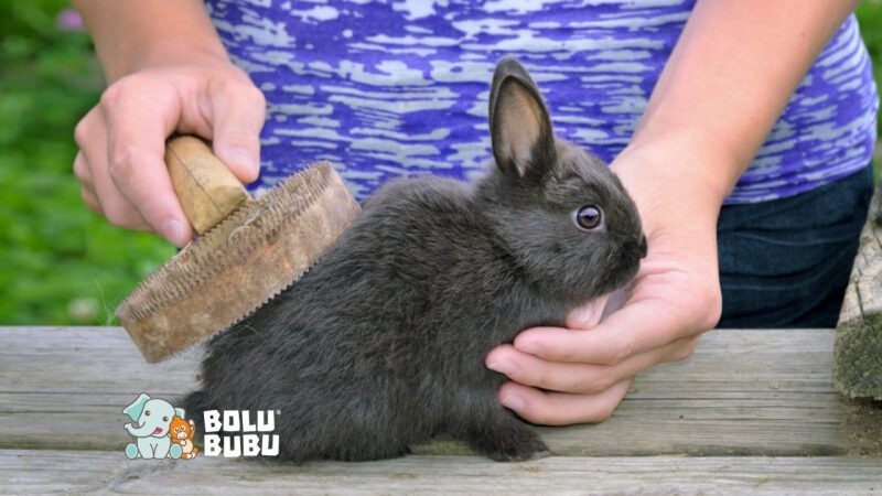mengapa hairball kelinci lebih berbahaya dibandingkan pada kucing
