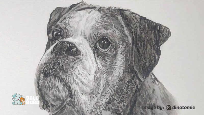 melukis anjing menggunakan abu kremasi
