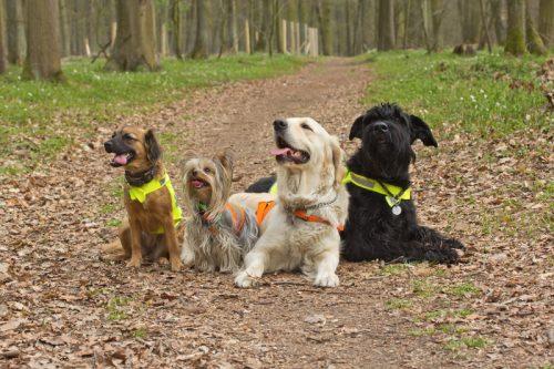 sekelompok anjing menggunakan rompi