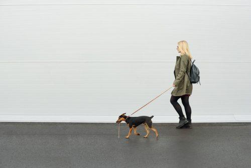 seorang wanita berjalan bersama anjingnya