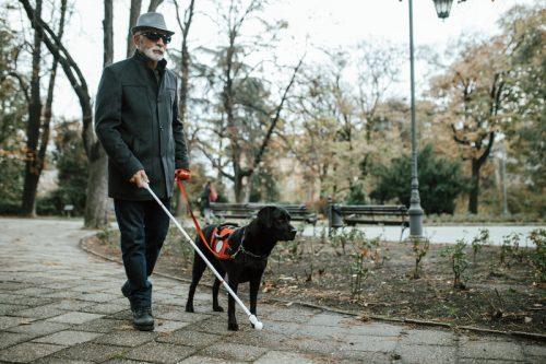 service dog yang membantu orang buta