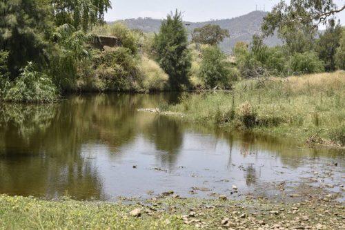 Kekeringan menyebabkan sungai tak lagi menjadi habitat yang sehat untuk ikan