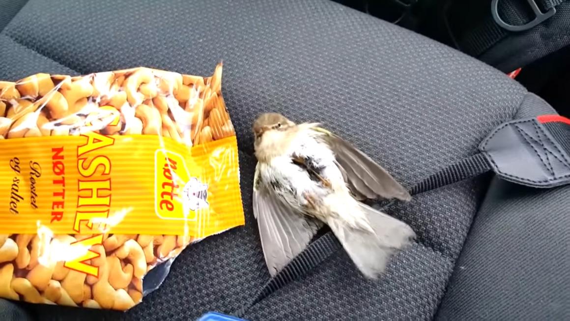 burung berbaring di atas jok mobil