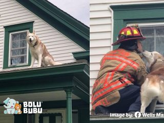 anjing yang mencium petugas pemadam kebakaran