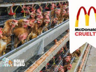kekejaman terhadap ayam di industri peternakan