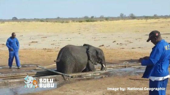 gajah terjebak di tempat penampungan air