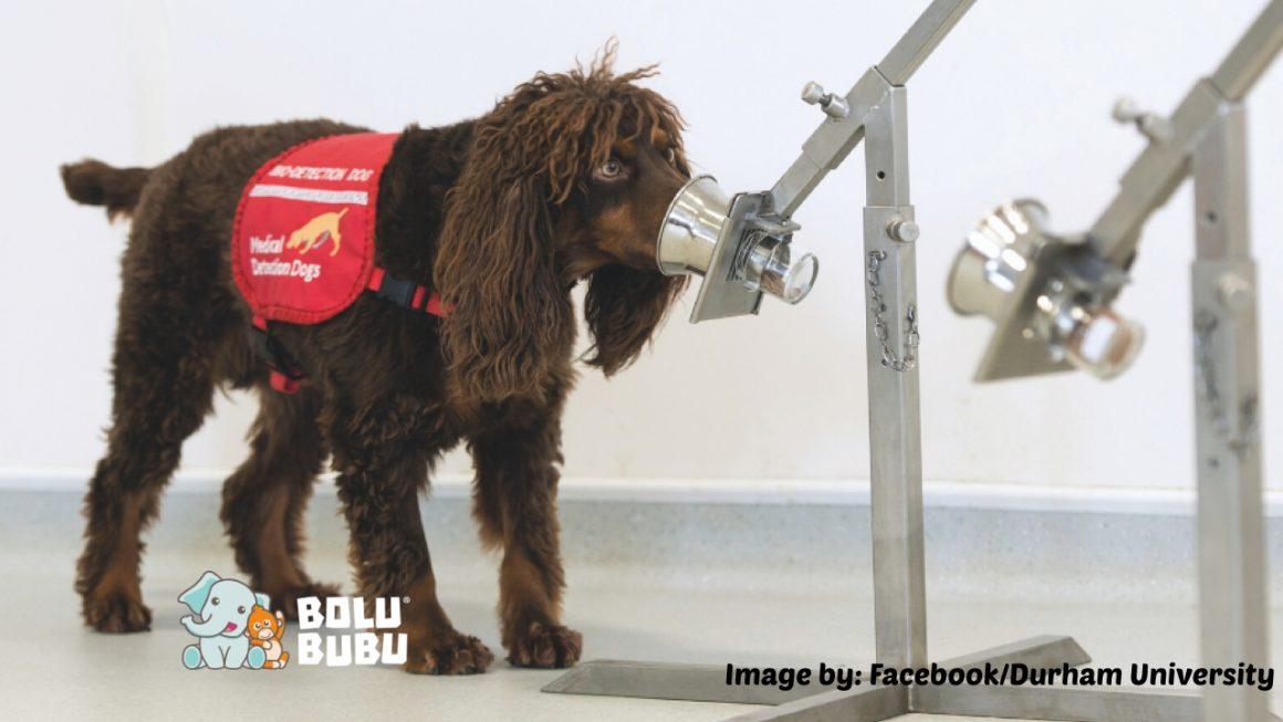 medical service dog covid-19