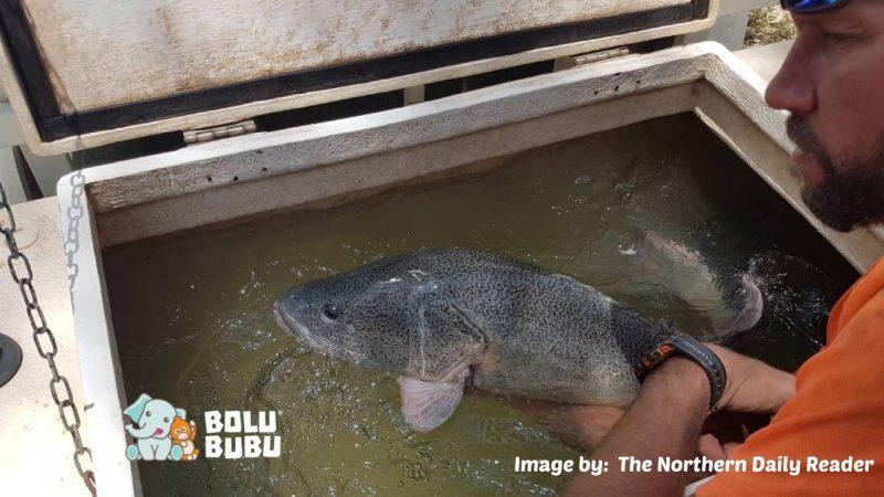 menyelamatkan ikan di sungai