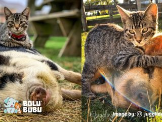 persahabatan ernest dan babi