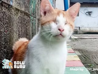 Pompa si kucing buta
