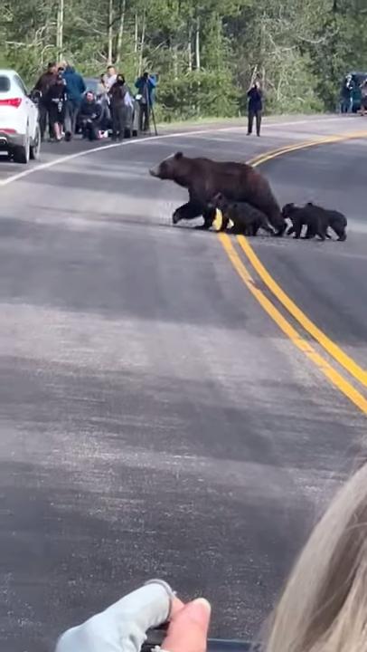 induk dan keempat anaknya menyeberang jalan