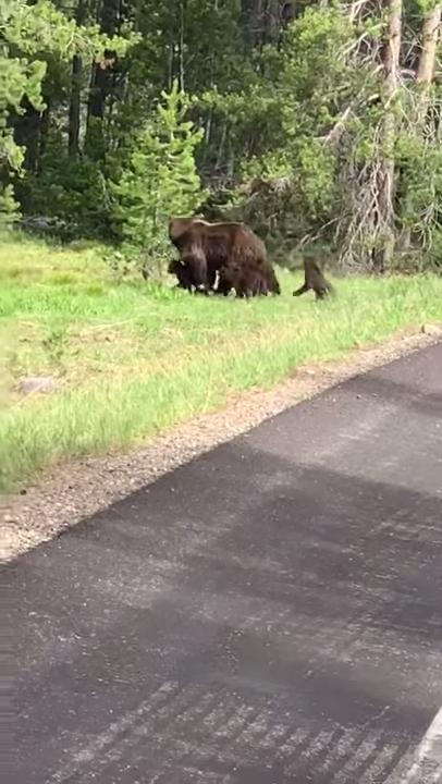 Induk beruang dan keempat anaknya