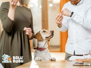 anjing memakan makanan sisa manusia