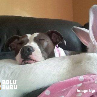 persahabatan anjing dan kelinci