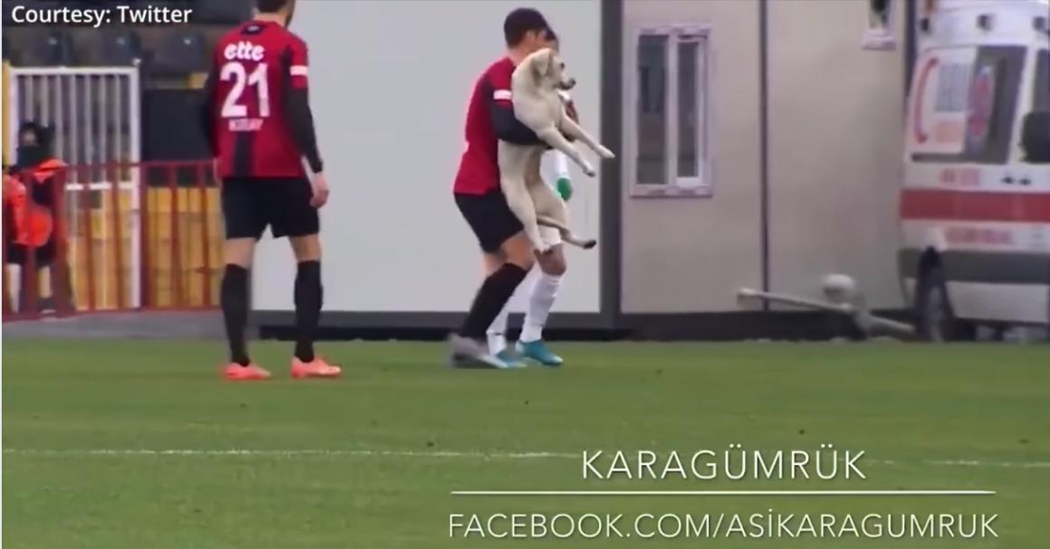 seorang atlet sepak bola menggendong anjing liar