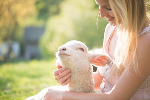 domba yang disayang oleh pemiliknya