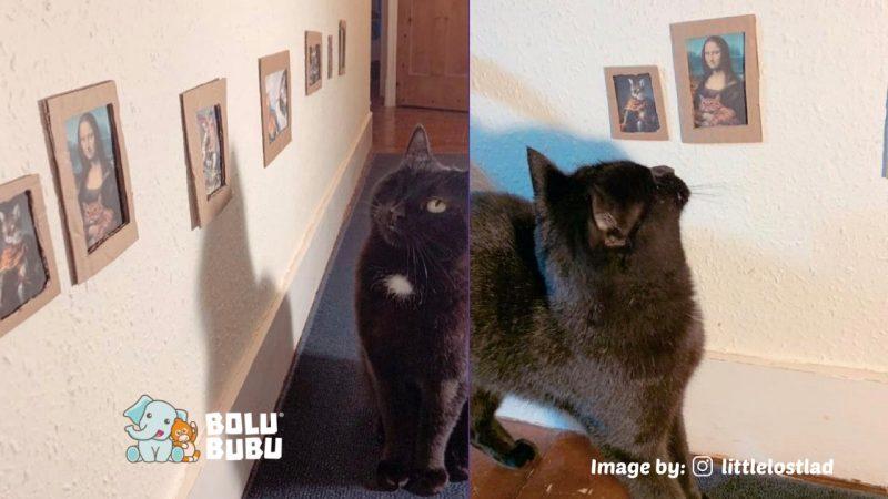 art gallery untuk kucing