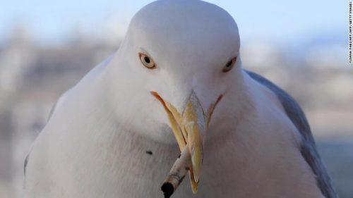 burung memakan puntung rokok