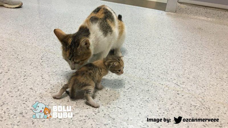 induk kucing membawa anaknya ke UGD
