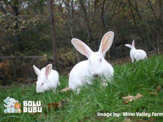 kelinci korban animal testing