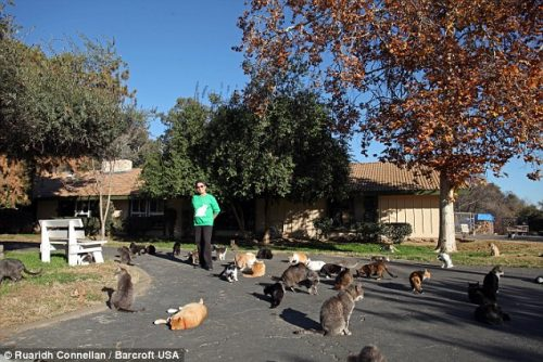 seorang wanita yang mengadopsi 1000 kucing jalanan