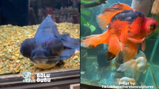 monstro ikan yang berubah warna