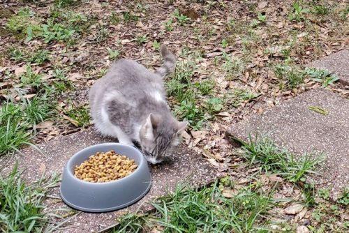 memberi makan kucing liar