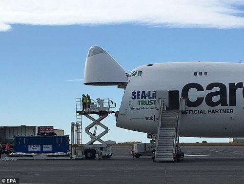 Pesawat kargo Boeing