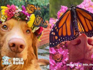 anjing bersahabat dengan kupu kupu