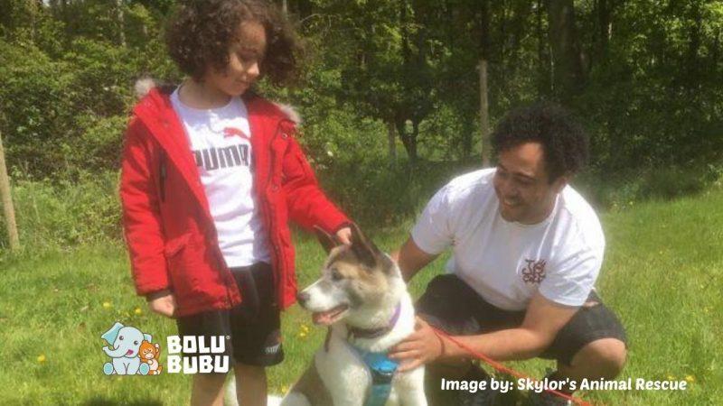 anjing bertemu kembali dengan keluarganya setelah dicuri