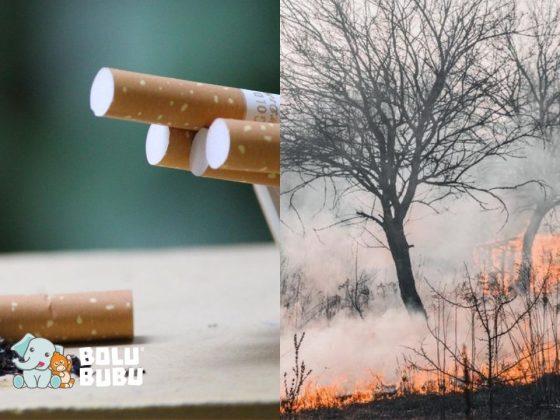 korelasi antara puntung rokok dan kebakaran hutan