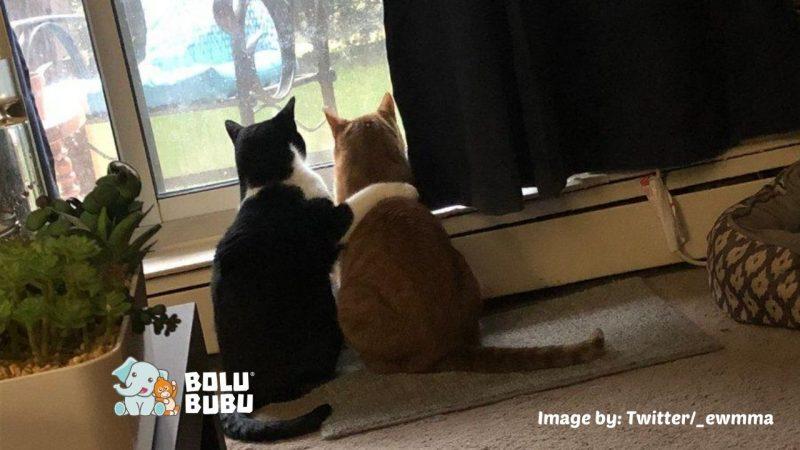 kucing merangkul saudaranya