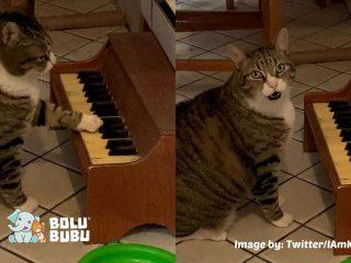 kucing yang memainkan piano setiap kali kelaparan