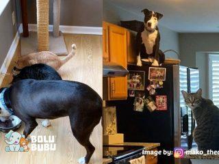 mako anjing yang seperti kucing